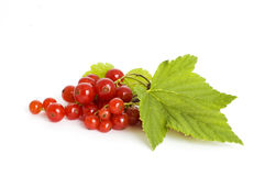 Red current. Berries of red current on white background stock images