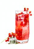 Red current drink Stock Image
