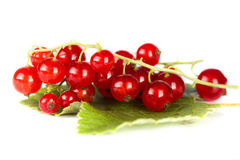 Red current. Fresh garden on white background royalty free stock photos
