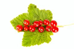 Red current Stock Images