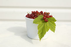 Red currents. Fresh red currents in the white bowl stock image