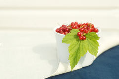 Red currents. Fresh red currents in the white bowl stock photos