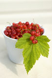 Red currents. Fresh red currents in the white bowl stock images