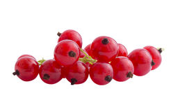 Red currents. Cluster of red currents isoleted on a white background Royalty Free Stock Photos