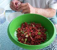 Red currents in colandar Stock Photography