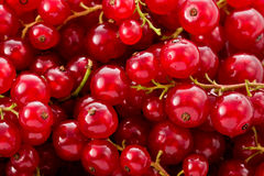 Red Currents (Ribes rubrum) Stock Photo