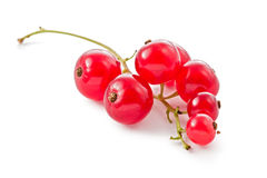 Red Currents (Ribes rubrum) Stock Image
