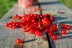 Red currents on wooden bench Royalty Free Stock Photo