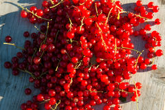 Red currents on wooden bench Royalty Free Stock Photos