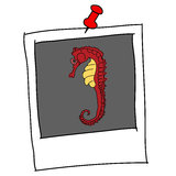 Red cute seahorse cartoon in polaroid Stock Images