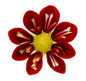 Red Dahlia Flower Royalty Free Stock Images