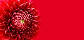 Dahlia red flower banner macro as wide border frame background. Concept for mother's day, valentines day, wedding, passion,. Red dahlia flower details macro Royalty Free Stock Image