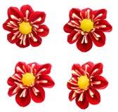 Red Dahlia Flowers Stock Image