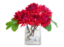 Red dahlia flowers in vase with river rocks - wh Stock Image