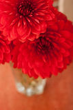 Red dahlia flowers in the vaze Stock Photo