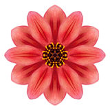 Red Dahlia Mandala Flower Kaleidoscopic Isolated on White Royalty Free Stock Images