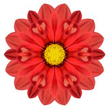 Red Dahlia Mandala Flower Kaleidoscopic Isolated on White Royalty Free Stock Photos