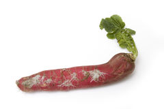 Red Daikon or Mooli Stock Photos