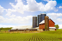 Red Dairy Farm. With Sunny Sky Royalty Free Stock Photo