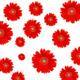 Red daisy background Stock Photo