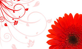 Red daisy background Stock Photography