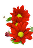 Red Daisy Royalty Free Stock Images