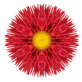 Red Daisy Mandala Flower Kaleidoscopic Isolated on White Stock Photo