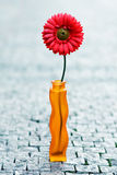 Red daisy in vase on street Royalty Free Stock Photos