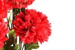 Red dalia flower. Beautiful shot red dalia flower on white background Royalty Free Stock Photography