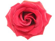 Red damask rose. Isolated on white background royalty free stock images