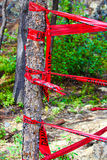 Red danger tape wrapped around a tree Stock Photo
