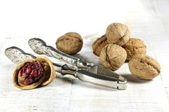 Red Danube Walnuts royalty free stock photography