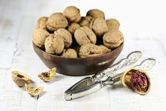 Red Danube Walnuts royalty free stock images