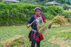 Red Dao ethnic minority in Vietnam. HA GIANG , VIETNAM - SEP 14 : Woman from the Red Dao minority in a village near Ha Giang in Vietnam on September 14 2018. The royalty free stock photography