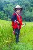 Red Dao ethnic minority in Vietnam. HA GIANG , VIETNAM - SEP 14 : Woman from the Red Dao minority in a village near Ha Giang in Vietnam on September 14 2018. The royalty free stock image