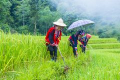 Red Dao ethnic minority in Vietnam. HA GIANG , VIETNAM - SEP 14 : Women from the Red Dao minority in a village near Ha Giang in Vietnam on September 14 2018. The royalty free stock photos