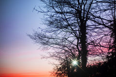Red dawn. Tree silhouetted by a glorious red dawn. Image could have spiritual significance and has natural blue sky copy space Stock Photography