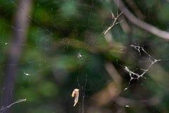 Red de la araña del abandono Imagenes de archivo