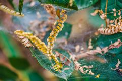 Red de la araña Web de araña fotografía de archivo