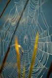 Red de la araña Fotografía de archivo