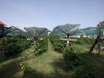 Red de la plantación de la frambuesa protegida Imagen de archivo