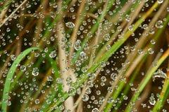 Red de los descensos del agua en el hilo de araña Foto de archivo