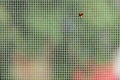 Red de mosquito Fotografía de archivo libre de regalías