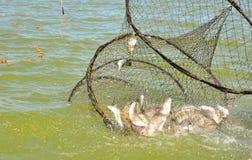 Red de pesca con los pescados Imagen de archivo