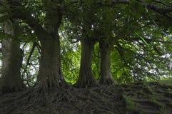 Red de raíces foto de archivo libre de regalías
