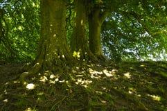 Red de raíces imagen de archivo
