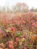 Red dead autumn leaves shrubland meadow country nature Stock Photos