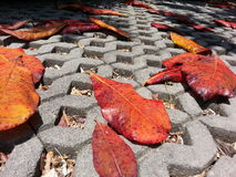 Red dead leaves on the road Stock Photo