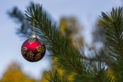 Red decorative ball on the christmas tree background in forest. Stock Photography