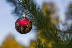 Red decorative ball on the christmas tree background in forest. Stock Photos
